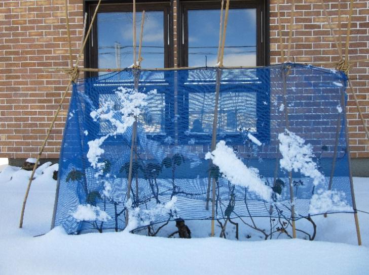 植木の冬囲いの写真